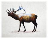 Rocky Mountain Elk Print by  Davies Babies