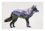 Rocky Mountain Grey Wolf Prints by  Davies Babies