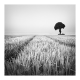 The Wheat Field Prints by Margaret Morrissey