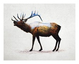 Rocky Mountain Elk Prints by  Davies Babies