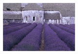 Lavender Abbey Art by Greg Gawlowski