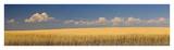 S. Dakota Prairie 1 Print by Steve McMahon