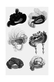Woman's Fashion in 1822, France : Different Sorts of Hats Print