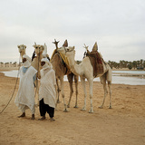 Men and Camels with Saddles, Algerian Desert Photo