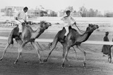 Camel Race in Saudi Arabia in Honour of Queen Elizabeth Ii's Visit to To the Middle East, 1979 Photo