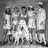Dalmatian Fashion, Paris, 26 October 1967 Photo