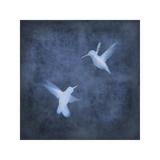 Flight in Blue I Giclee Print by Chris Donovan