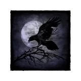 Crow Reproduction procédé giclée par Martin Wagner