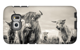 Highland Cattle Galaxy S6 Edge Case by Mark Gemmell