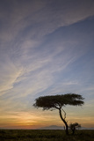 Acacia Tree and Clouds at Sunrise Photographic Print by James Hager