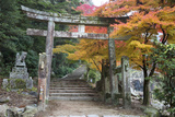 Torii Gate and Steps of Daisho-In Temple in Autumn, Miyajima Island, Western Honshu, Japan Photographic Print by Stuart Black