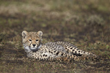 Cheetah (Acinonyx Jubatus) Cub Photographic Print by James Hager
