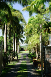 Nevis Botanical Garden, Nevis, St. Kitts and Nevis Photographic Print by Robert Harding