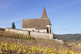 St. Jacques Church, Vineyards in Autumn, Hunawhir, Alsace, France Photographic Print by Markus Lange