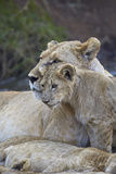 Lion (Panthera Leo) Female and Cub, Ngorongoro Crater, Tanzania, East Africa, Africa Photographic Print by James Hager