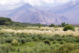 Landscape in the Andes, Argentina Photographic Print by Peter Groenendijk
