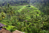 The Rice Terraces Near Ubud, UNESCO World Heritage Site, Bali, Indonesia, Southeast Asia, Asia Photographic Print by Lynn Gail