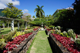 Nevis Botanical Garden, Nevis, St. Kitts and Nevis Photographic Print by Robert Harding