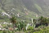 Terraces, Valle Gran Rey, La Gomera, Canary Islands, Spain, Europe Photographic Print by Markus Lange