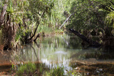 Swamp Land, Gove, Northern Territory, Australia, Pacific Photographic Print by Lynn Gail