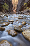 The Narrows of the Virgin River in the Fall Photographic Print by James Hager