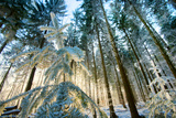Setting Sun Illuminating the Frozen Forest of Koenigstuhl Mountain (Kings Chair) Photographic Print by Andreas Brandl