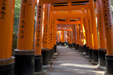 Senbon Torii (1,000 Torii Gates), Fushimi Inari Taisha Shrine, Kyoto, Japan Photographic Print by Stuart Black