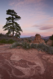 Pine Tree and Sandstone at Dawn with Pink Clouds Photographic Print by James Hager