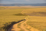 Dusty Road Leading Through the Nyika National Park, Malawi, Africa Photographic Print by Michael Runkel