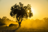 Dust in Backlight at Sunset, South Luangwa National Park, Zambia, Africa Photographic Print by Michael Runkel
