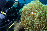 Scuba Diver with False Clown Anenomefish, Magnificent Sea Anemone, Cairns, Queensland, Australia Photographic Print by Louise Murray