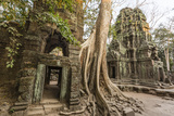 Ta Prohm Temple, Being Destroyed by Jungle Growth, Angkor, UNESCO World Heritage Site, Cambodia Photographic Print by Michael Nolan