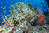 Colourful Reef Fish and Leopard Coral Grouper, Queensland, Australia Photographic Print by Louise Murray