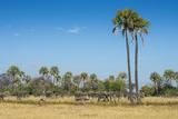 Waterbucks (Kobus Ellipsiprymnus) in Front of African Bush Elephants (Loxodonta Africana) Photographic Print by Michael Runkel