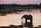 African Elephant (Loxodonta Africana), Khwai Concession, Okavango Delta, Botswana, Africa Photographic Print by Sergio Pitamitz
