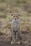 Cheetah (Acinonyx Jubatus) Cub, Serengeti National Park, Tanzania, East Africa, Africa Photographic Print by James Hager