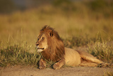 Lion (Panthera Leo), Serengeti National Park, Tanzania, East Africa, Africa Photographic Print by James Hager