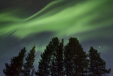 Amazing Northern Lights (Aurora Borealis) Display over Pine Trees in Night Skies, Kiruna, Sweden Photographic Print by David Clapp