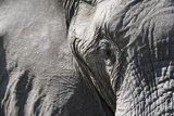 Close-Up of an African Elephant (Loxodonta Africana) Photographic Print by Sergio Pitamitz