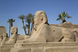 Avenue of Sphinxes, Luxor Temple, Luxor, Thebes, Egypt, North Africa, Africa Photographic Print by Richard Maschmeyer