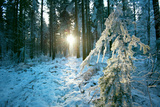 The Sun Finding a Small Opening in the Snowy Forest of Koenigstuhl Photographic Print by Andreas Brandl