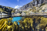 Above and Below Water View of Kelp in Hercules Bay, South Georgia, Polar Regions Photographic Print by Michael Nolan