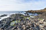 The Giants Causeway, County Antrim, Ulster, Northern Ireland, United Kingdom Photographic Print by Michael Runkel