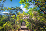Stone Steps Leading into the Lush Natural Environment with Trees and Blossoms of Tian Mu Shan Photographic Print by Andreas Brandl