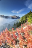 Red Shrubs Coloring a Foggy Autumn Day in Engadine, Near St. Moritz, Graubunden, Switzerland Photographic Print by Roberto Moiola