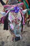 Decorated Cow, Goa, India, Asia Photographic Print by Yadid Levy