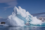 Arch in Iceberg, Cierva Cove, Antarctica, Polar Regions Photographic Print by Michael Nolan