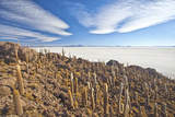 An Amazing View from the Top of the Isla Incahuasi, Salar De Uyuni, Bolivia, South America Photographic Print by Roberto Moiola