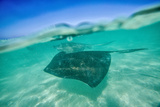Snap on the Water at Stingray City Photographic Print by Roberto Moiola