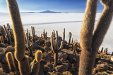 Cacti, Isla Incahuasi, a Unique Outcrop in the Middle of the Salar De Uyuni, Oruro, Bolivia Photographic Print by Roberto Moiola